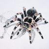 Tarantula222's avatar