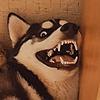 TaraUlex's avatar