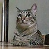 tartaros88's avatar