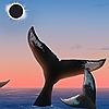 taslishaw's avatar
