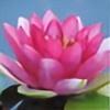 Tatsushan's avatar
