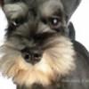 Tauntstar's avatar