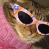 tavuksuyu's avatar