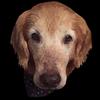 tdt13's avatar