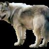 team-51's avatar