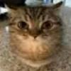 technohedgehog47's avatar