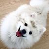 Teilema's avatar