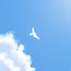 Telepurte's avatar