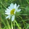 Temansha's avatar