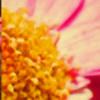 TemariGraphic's avatar