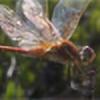 Temerita's avatar