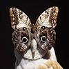 tenebris-aurea's avatar