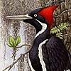 TensaiSaiyan's avatar