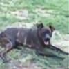 thao187's avatar