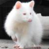 ThatIntern's avatar