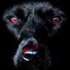 ThatLuckyHorseshoe's avatar