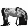 The-Disarray's avatar