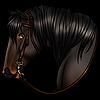 The-Little-Ragdoll's avatar