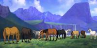 The-Sunrise-Herd