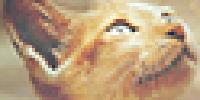 TheApostlesWarriors's avatar