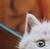 thebabypokemon's avatar