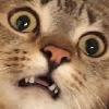 Thecatnipwizard's avatar