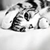 thecatsmiao's avatar
