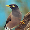 TheCommonMyna's avatar