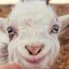 TheDeliriousGoat's avatar