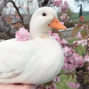 TheDuckLadyy's avatar