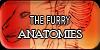 TheFurryAnatomies