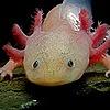 TheHackerAxolotl's avatar