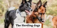 TheHerdingDogs