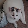 TheLateSymphonic's avatar