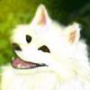 TheMooskyDoggo's avatar