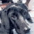 thereborndragon's avatar