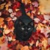 TheRiri's avatar
