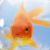 thiagovscoelho's avatar