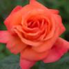 Tiana-Rose190's avatar