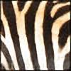 TiggyWiggy's avatar