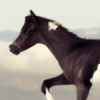 Tinkerhorse's avatar