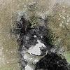 Tinteddy's avatar