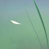 TinyWild's avatar