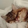 Tirnia's avatar