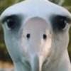 tkitcs's avatar