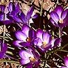 TMagnum's avatar