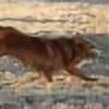 TollerRed's avatar