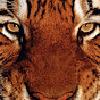 Tomcat770's avatar