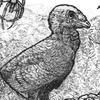 Tomozaurus's avatar