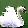 Tonyryna's avatar